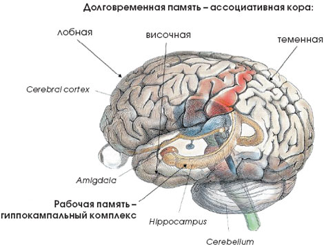 Сознание и мозг
