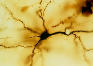 Как мозг определяет важность