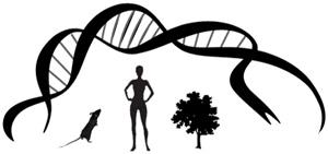 Развитие Организма Человека