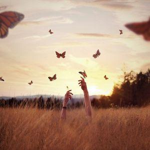 Ловля бабочек