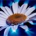 Энергобиопотенциал, как отдельное чувство