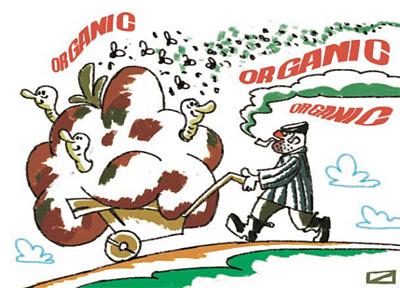 Органическая еда питательнее. Так ли это?