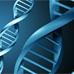 Волновой геном