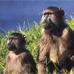 Бог - побочный эффект эволюции