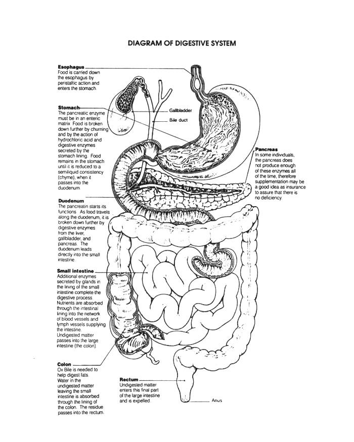 Физиология позднего приема пищи