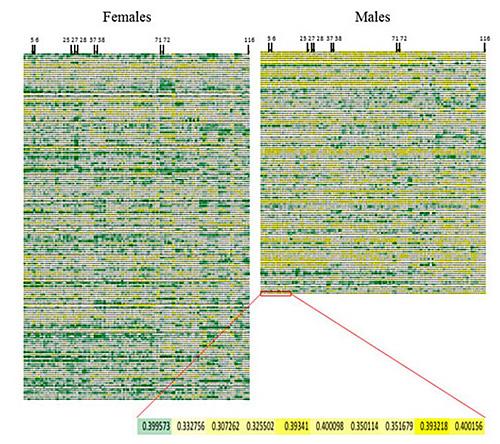 Не существует особенностей «женского» и «мужского» мозга