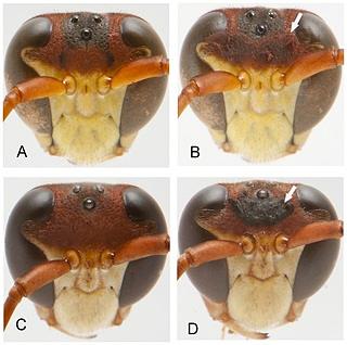 О чем думают мухи