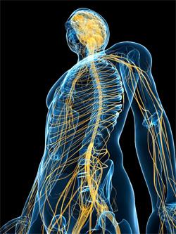 Дисбаланс основных нервных процессов