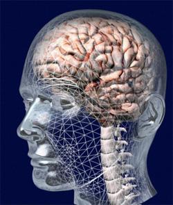Новая нейрофизиология телесности