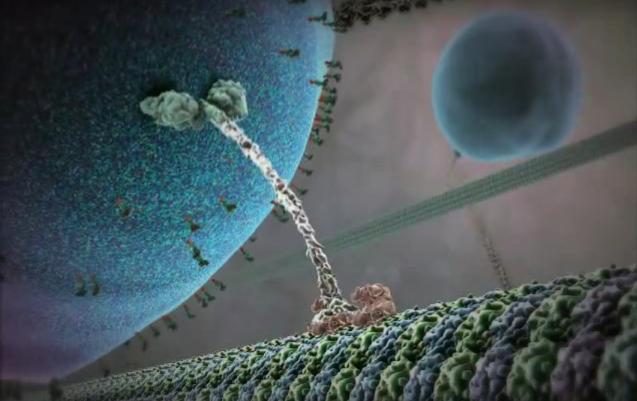 Космос биомолекулярной жизни. Часть 1