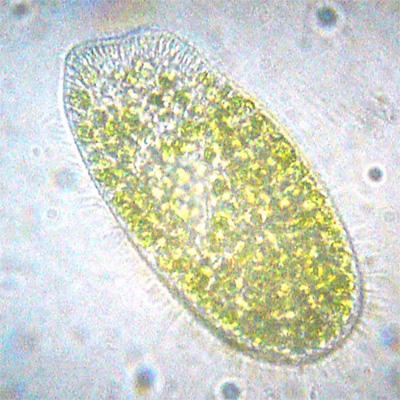 Космос биомолекулярной жизни. Часть 2