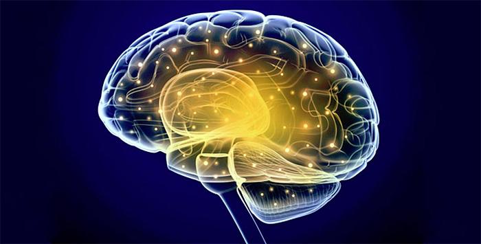 Современная метафора мозга – компьютер
